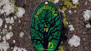Evighedstræet. Adslev Slægten